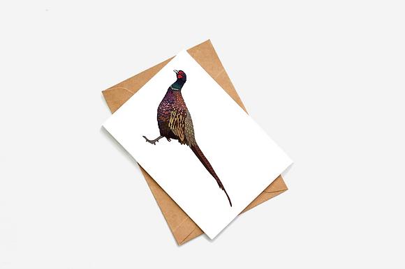 Pheasant lllustration card