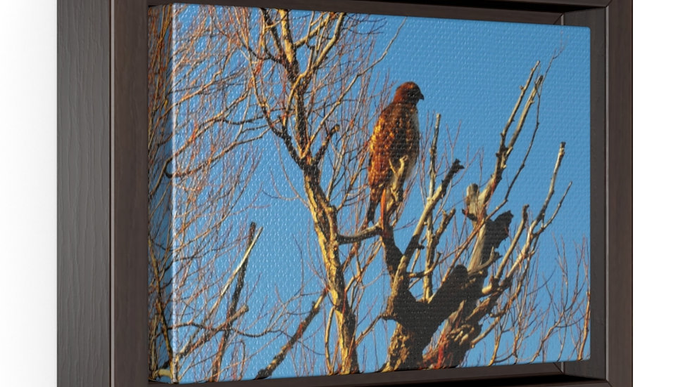 Red Tail Hawk Horizontal Framed Premium Gallery Wrap Canvas
