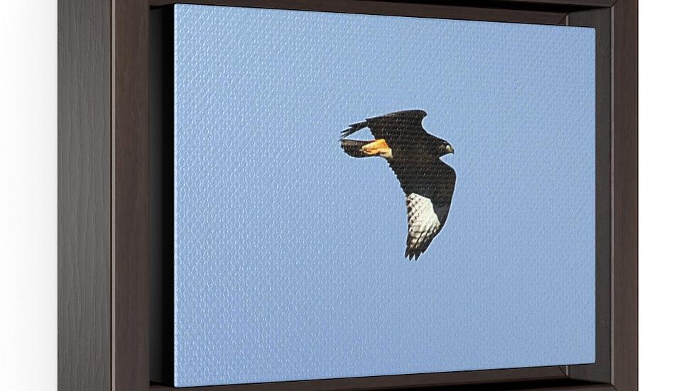Hawk in Flight Horizontal Framed Premium Gallery Wrap Canvas