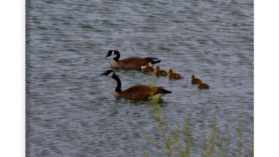 Family Swim Lake Beckwith Colorado Canvas Gallery Wraps