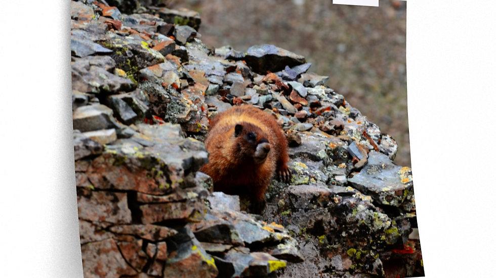 Mountain Marmot, Colorado Premium Matte horizontal posters