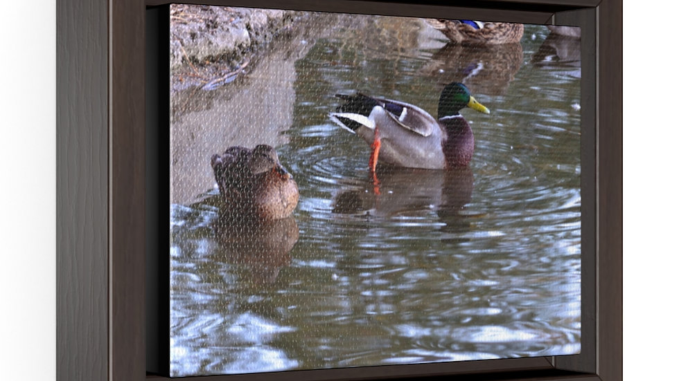 Duck on the Pond Horizontal Framed Premium Gallery Wrap Canvas