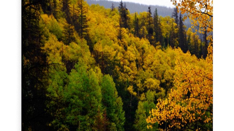 Mountain  Fall Foliage Canvas Gallery Wraps