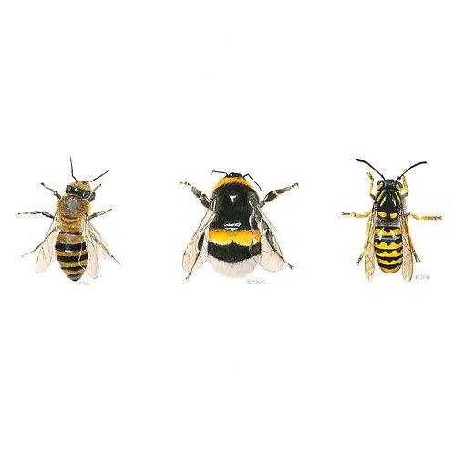 Bee Series