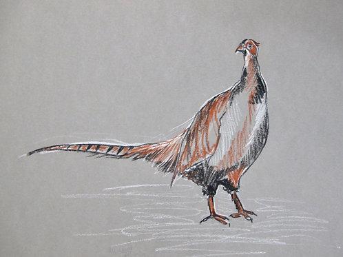 Pheasant II