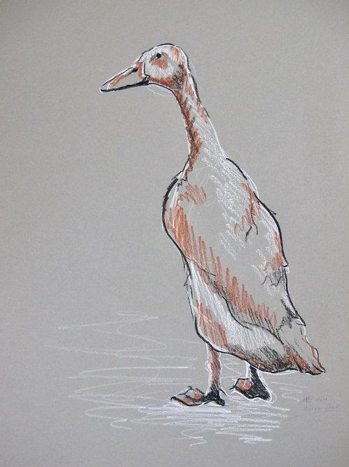Runner duck II