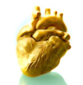Anotomical Heart Gold, anonymouslimbs.com -1.jpg