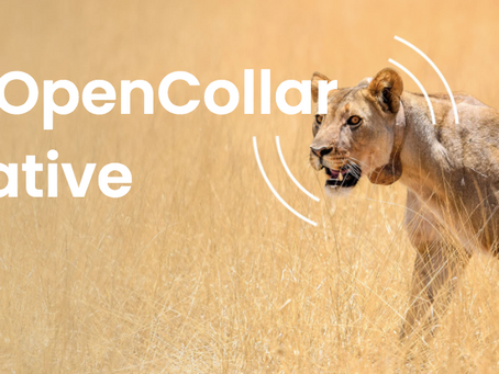 OpenCollar is a conservation collaboration to design, support and deploy open-source tracking collar