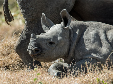 Your World Environment Day Reminder: IoT Can Play a Part in Preserving Wildlife