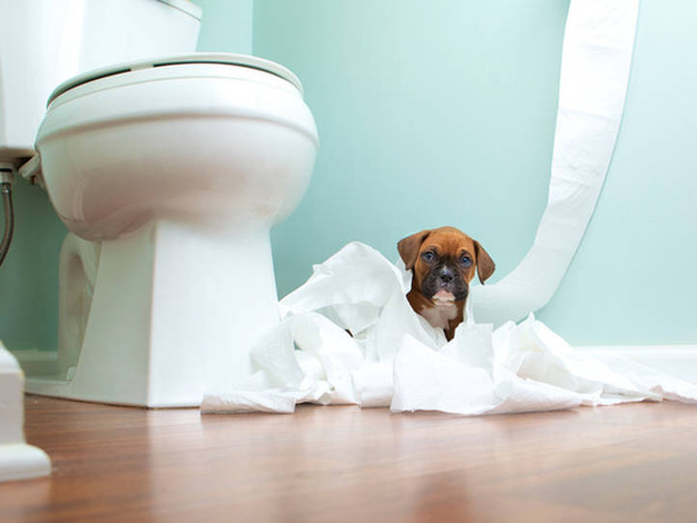 Why Is My Toilet Always Clogged up?