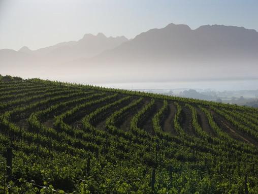 winery3.jpeg