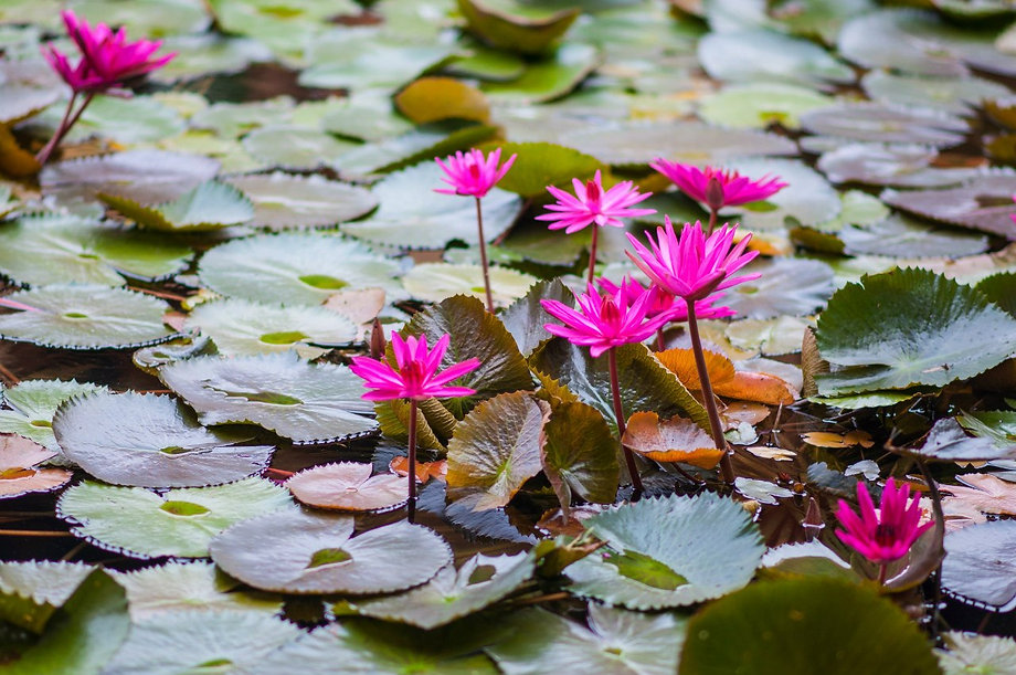 Фотограф во Вьетнаме ©Anna Treffilova