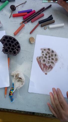 Dessin botanique d'un graine MEV - sable