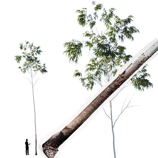 dviz Tree 11