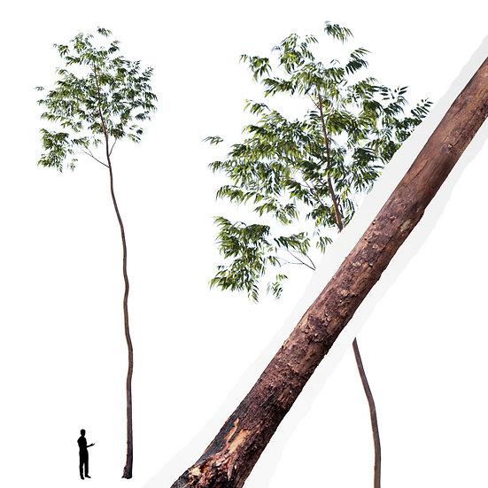 dviz Tree 18