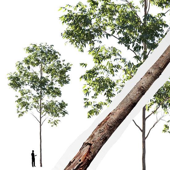 dviz Tree 03