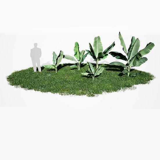dviz Plant 10