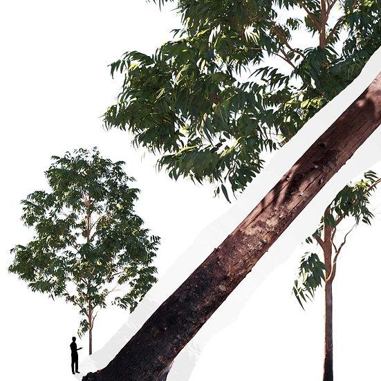 dviz Tree 06