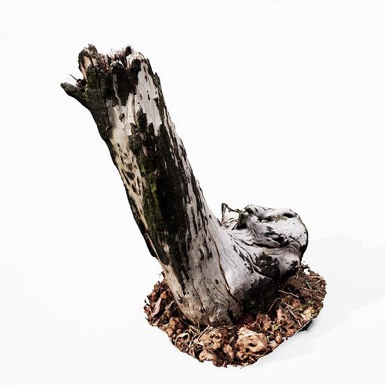 dviz Stump 08