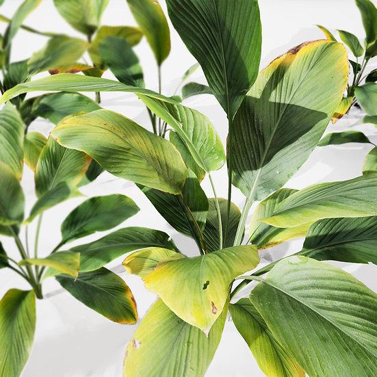 dviz Plant 17