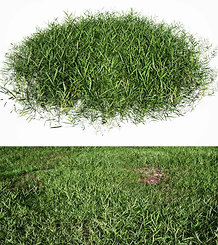 dviz Grass 01