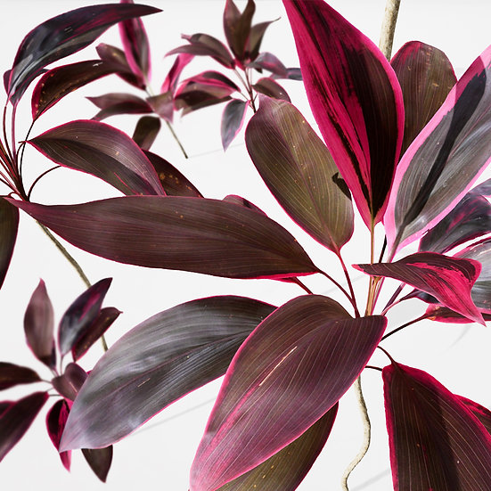 dviz Plant 14