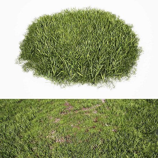 dviz Grass 04