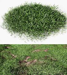 dviz Grass 02