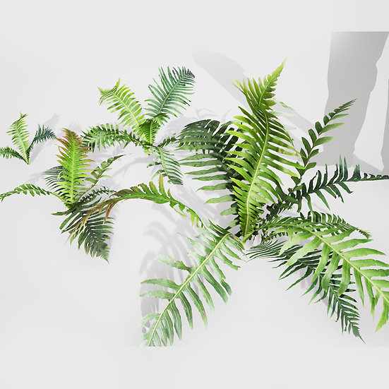 dviz Plant 13