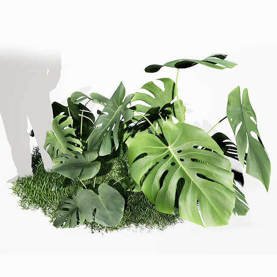 dviz Plant 06