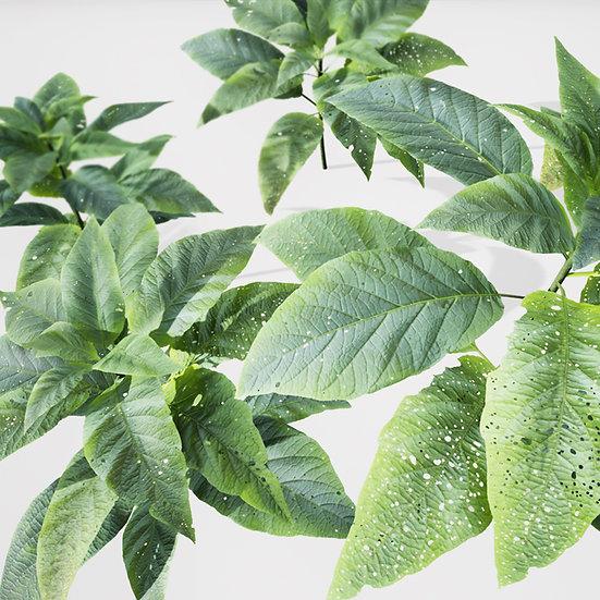 dviz Plant 16