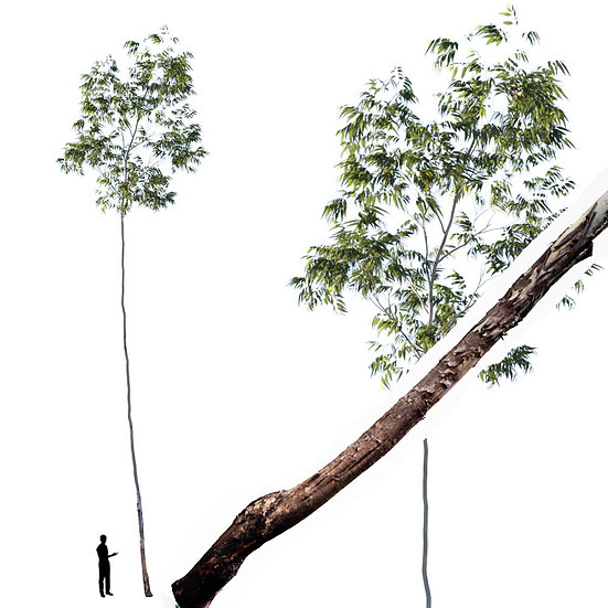 dviz Tree 15