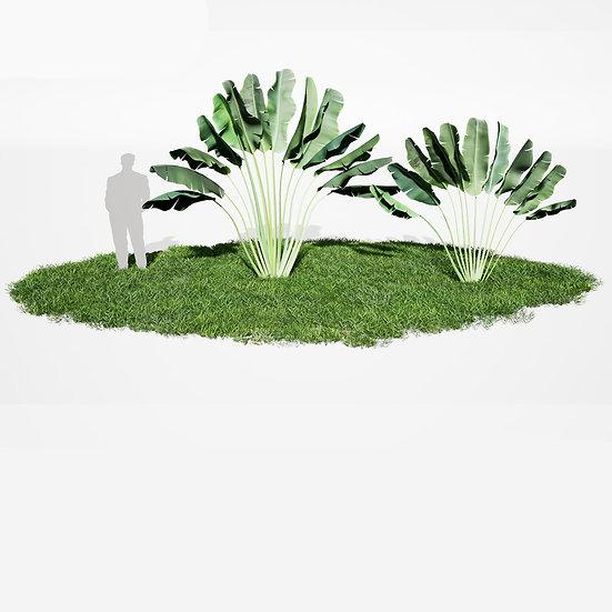 dviz Plant 12