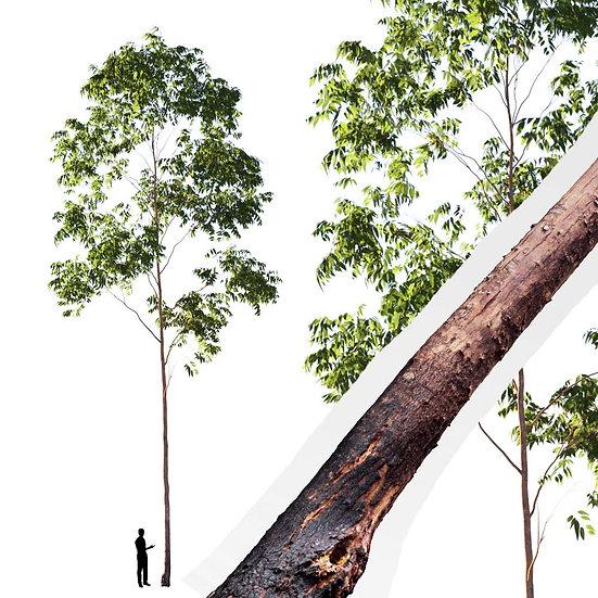 dviz Tree 02