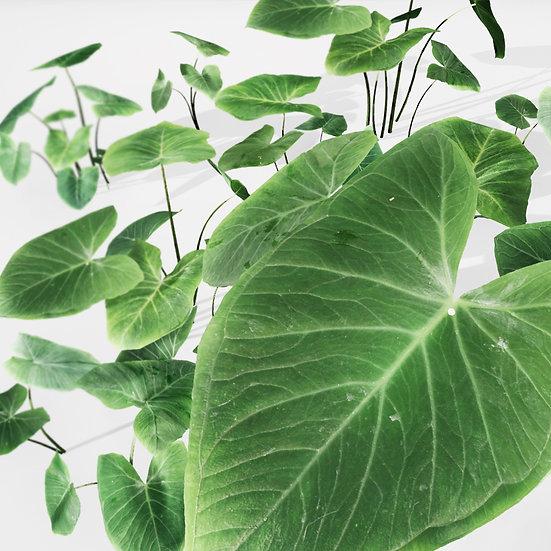 dviz Plant 01