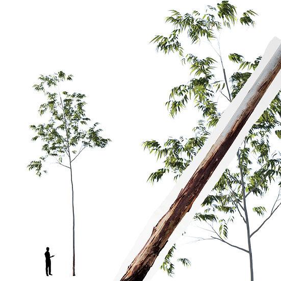 dviz Tree 14