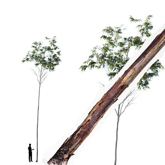 dviz Tree 08