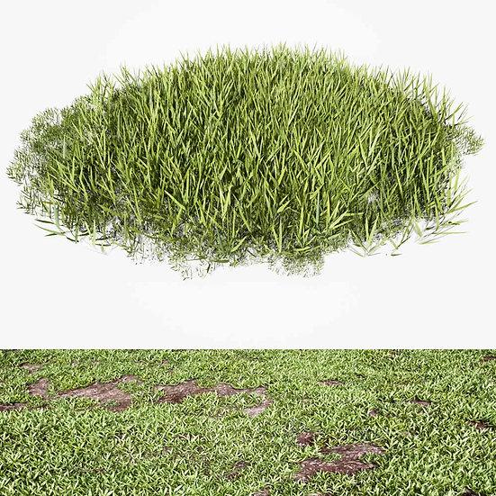dviz Grass 06