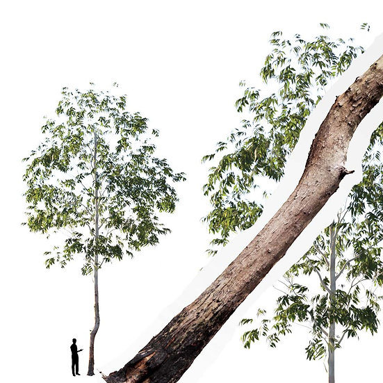 dviz Tree 05