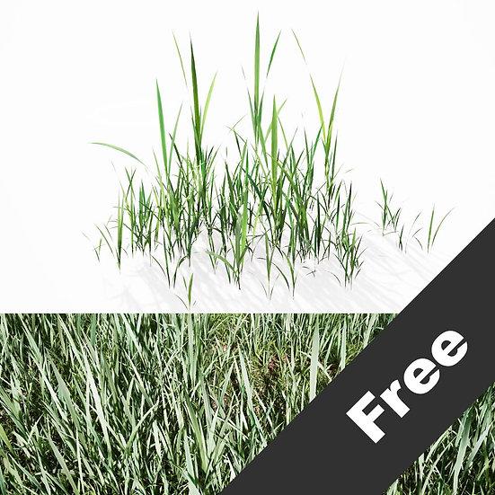 dviz Grass 09