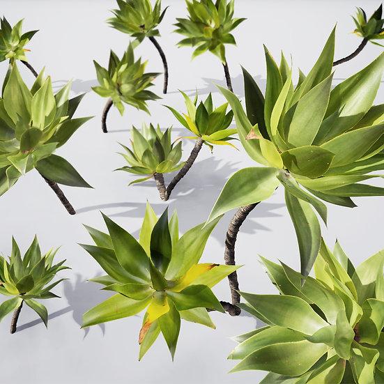 dviz Plant 19
