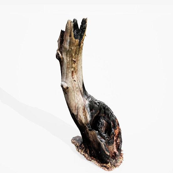 dviz Stump 06