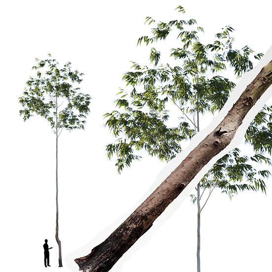 dviz Tree 13