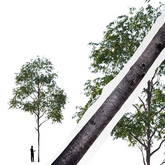 dviz Tree 04