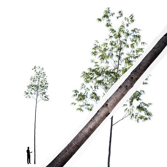 dviz Tree 12