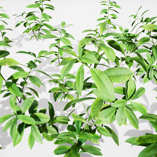 dviz Plant 22