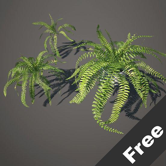 dviz Plant 24