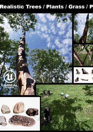 dviz_tree_00a.jpg