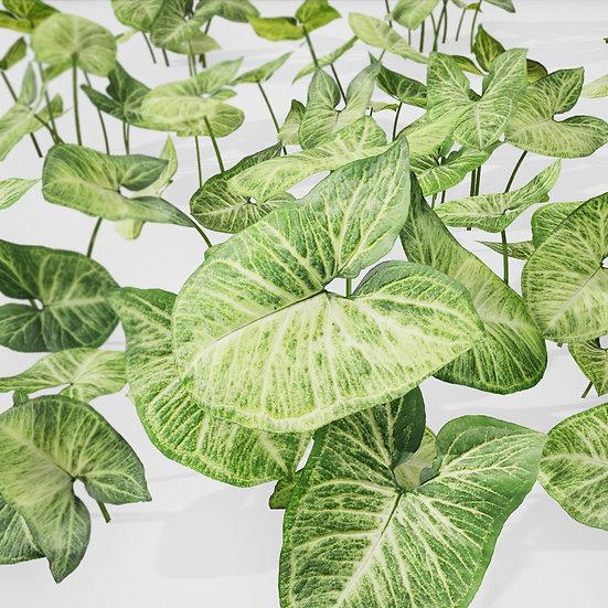 dviz Plant 20