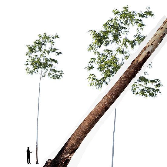 dviz Tree 17